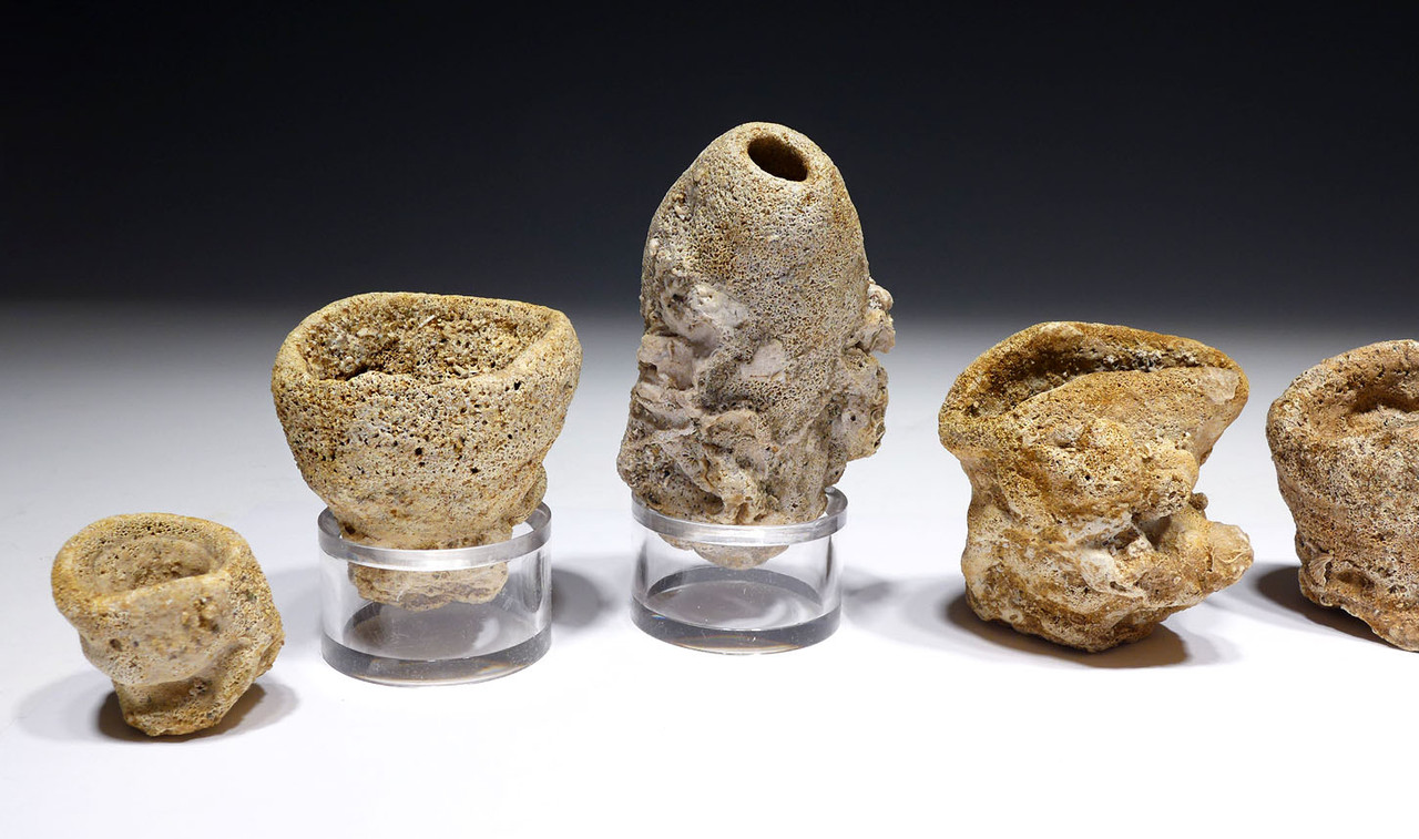 FOSSIL CRETACEOUS SEA SPONGE COLLECTION FROM FARINDGON ENGLAND OF THE DINOSAUR DAYS  *SP455