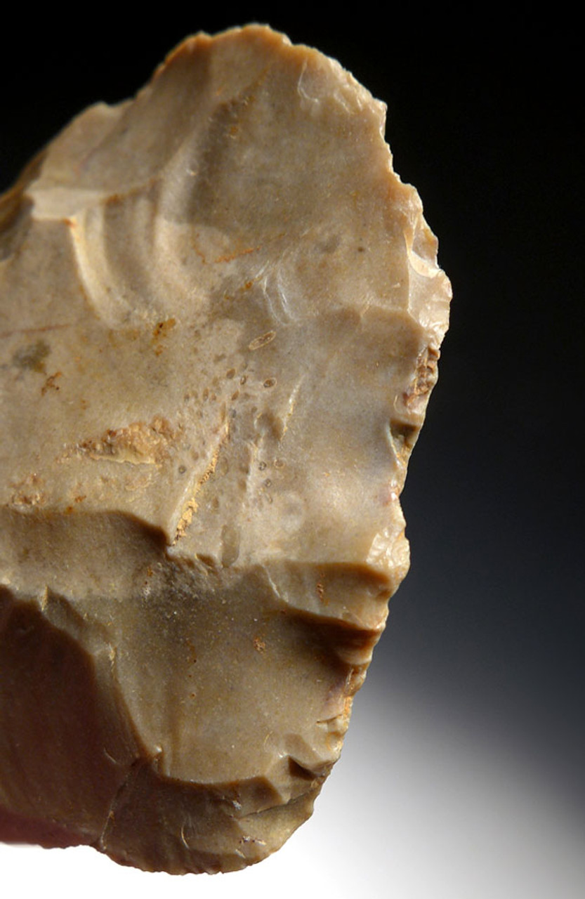 FINEST LARGE NEANDERTHAL MOUSTERIAN FLINT FLAKE SCRAPER TOOL WITH FOSSIL SHELL FROM FRANCE  *M416