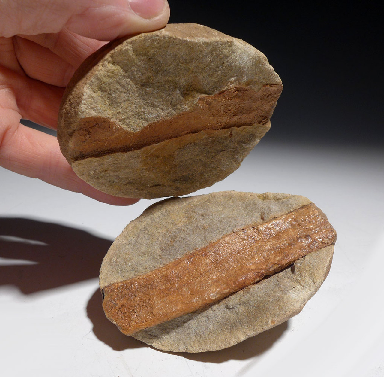 THREE FOSSIL OLIGOCENE LEAF AND PETRIFIED WOOD IN STEINHARDT PEA CONCRETIONS FROM BAD KREUZNACH GERMANY   *PL185