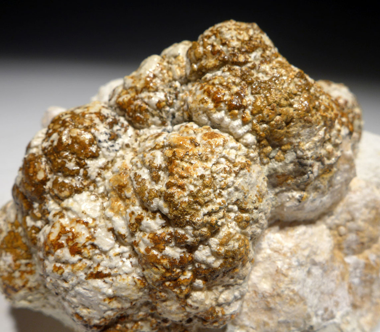 OLIGOCENE FOSSIL STROMATOLITE CYANOBACTERIA BALL COLONIES FROM AN ANCIENT LAKE  *STR581