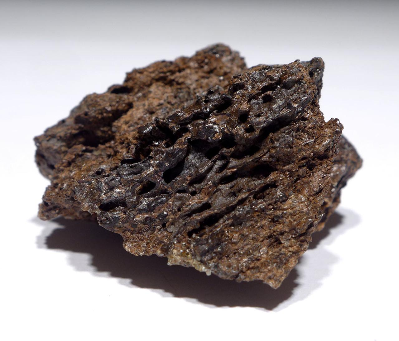 GENUINE TYRANNOSAURUS T REX DINOSAUR BONE FOSSIL FRAGMENT FROM HELL CREEK MONTANA  *DBX052