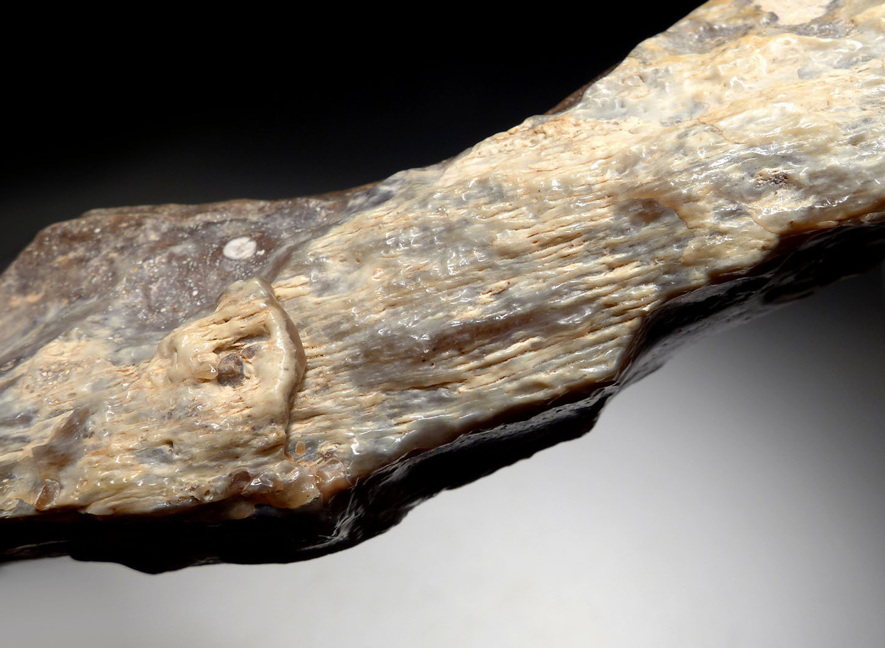 EXCEPTIONALLY LARGE AFRICAN CAPSIAN NEOLITHIC FLINT PICK AXE WEAPON WITH INGENIOUS DESIGN GRIP   *CAP264