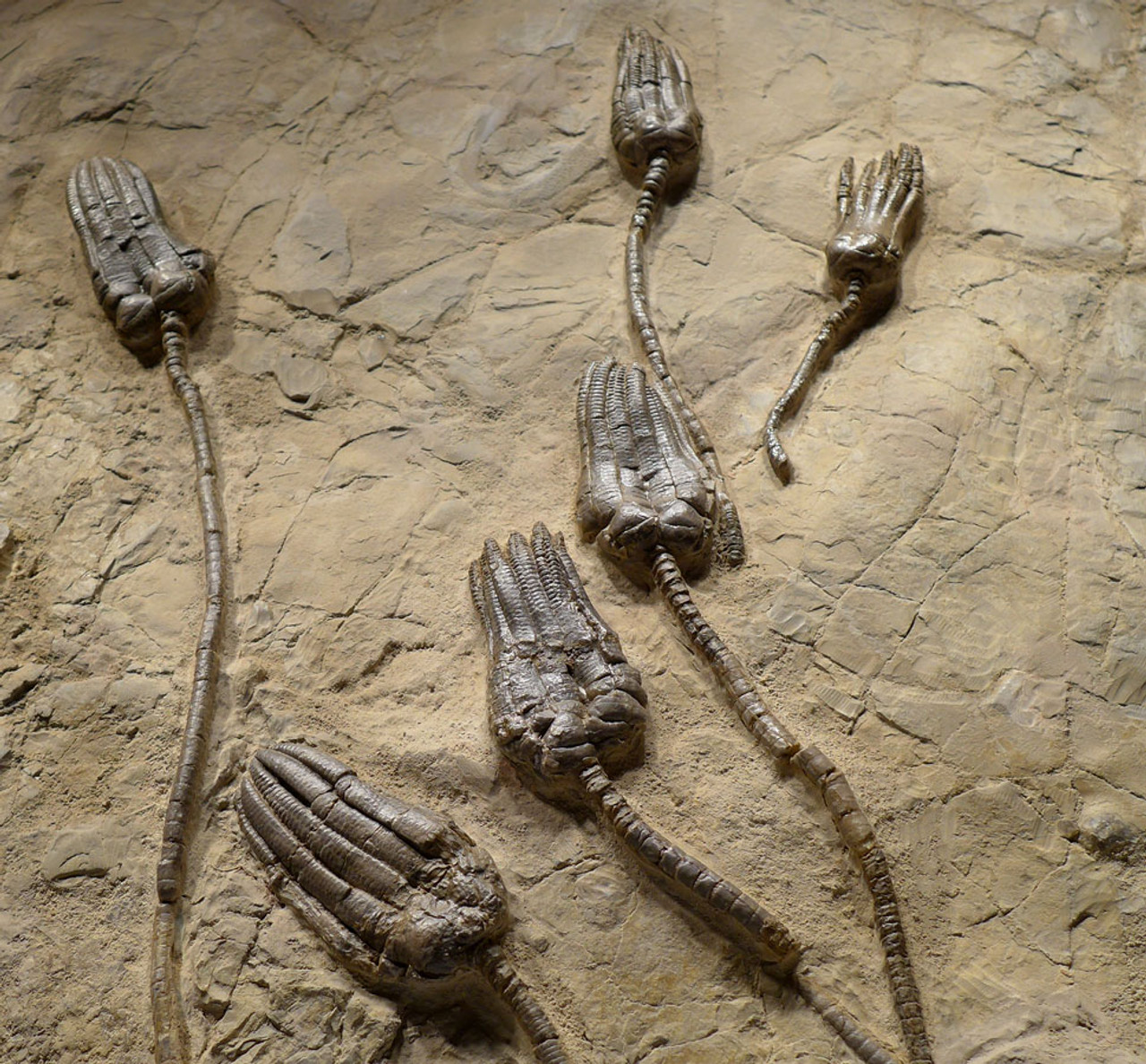 interior designing with fossils
