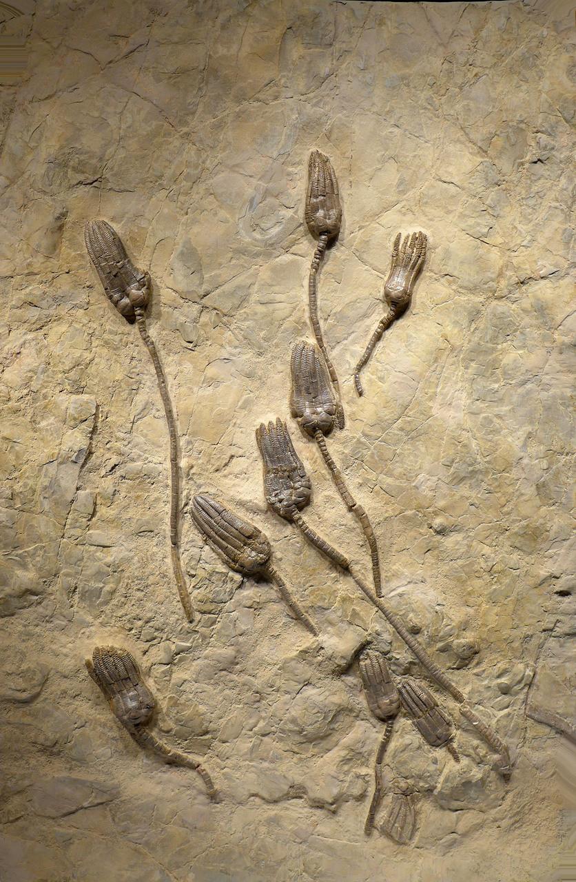interior design fossils