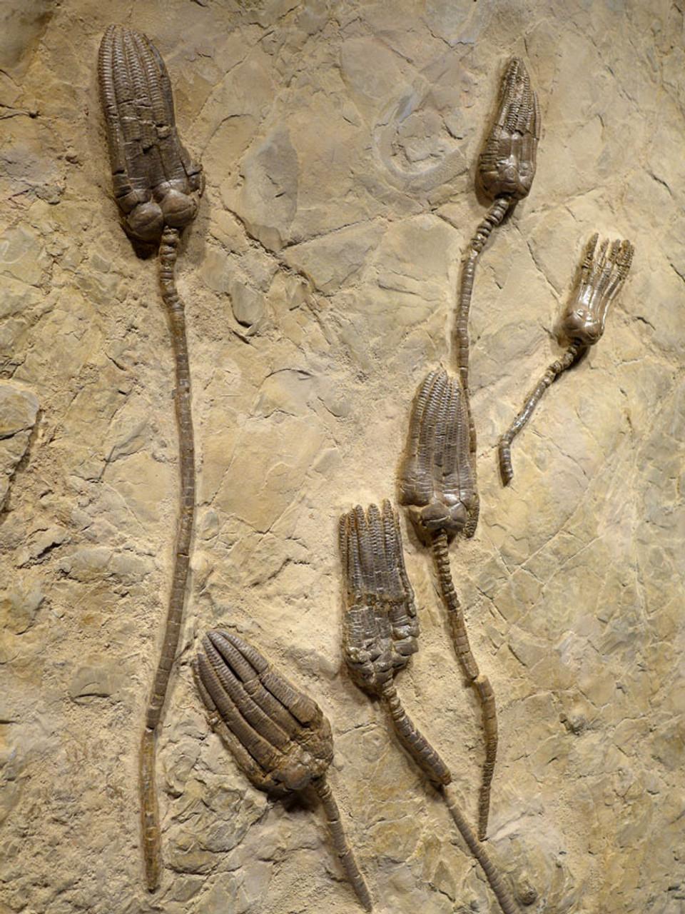 interior designing fossils