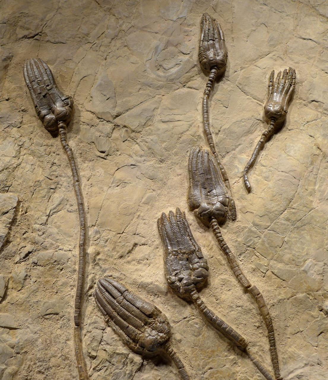 interior fossils