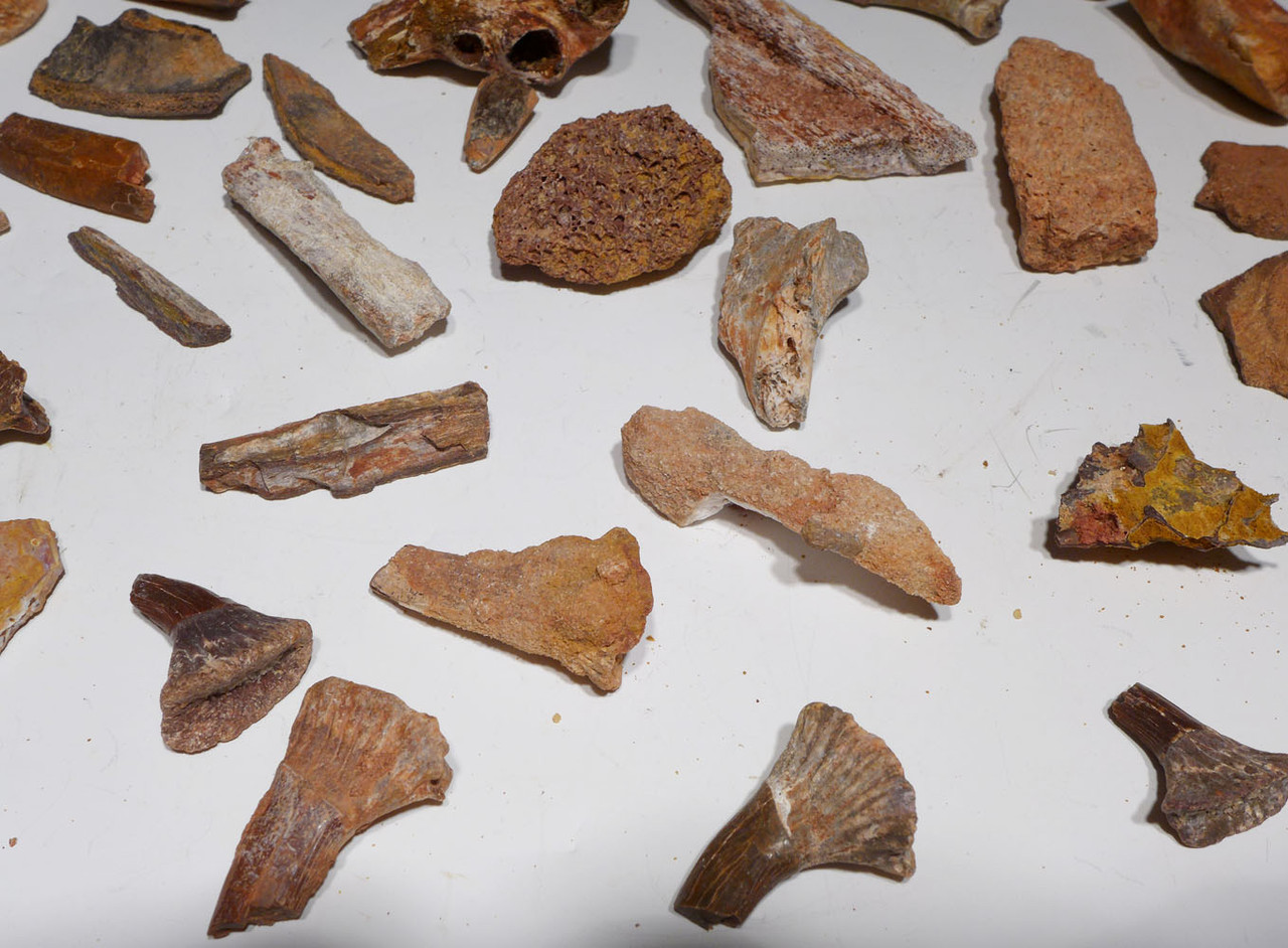 COLLECTION OF 60 FOSSIL DINOSAUR REPTILE AND SHARK BONES AND TEETH  *BONELOT56