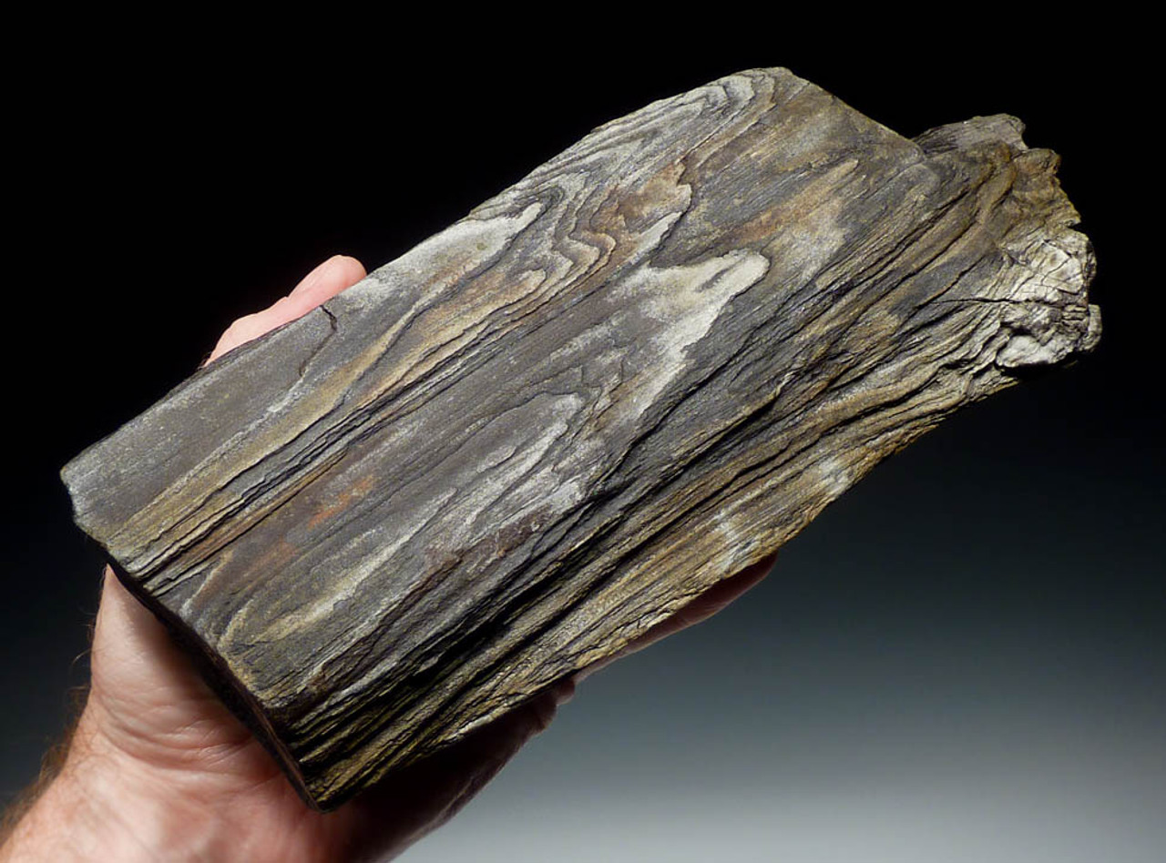 INCREDIBLE MIOCENE FOSSILIZED WOOD GRAIN PETRIFIED WOOD LOG FROM EUROPE  *PL065