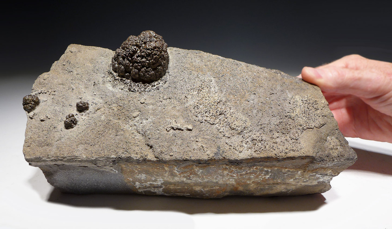 RARE PERMIAN FRESHWATER FOSSIL STROMATOLITE BACTERIA BALL COLONIES IN DIFFERENT FORMATION STAGES  *STX700