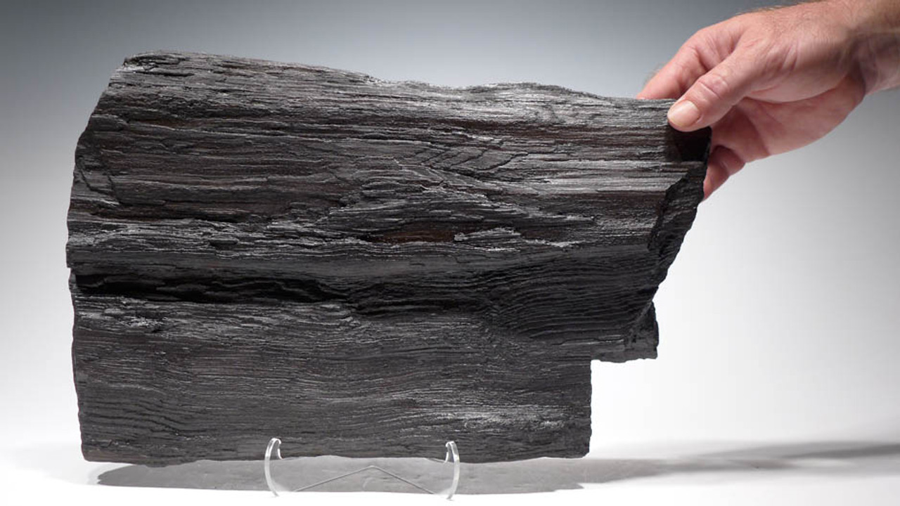 PL070 - LARGE PETRIFIED WOOD PARTIAL FOSSILIZED LOG FROM THE MIOCENE PERIOD WITH NATURAL DETAIL FROM EAST EUROPE