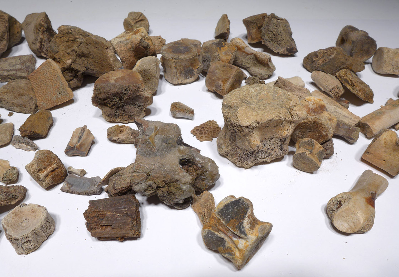 LARGE COLLECTION OF DINOSAUR AND OTHER REPTILE FOSSIL FRAGMENTS FROM HELL CREEK  *HELLCREEK1