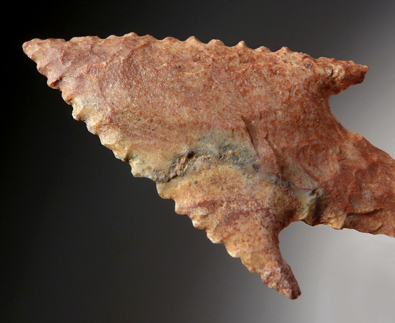 FINEST COLORFUL SERRATED BARBED CAPSIAN AFRICAN NEOLITHIC ARROWHEAD  *CAP282