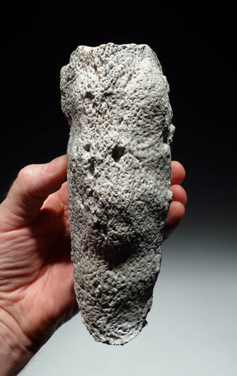 SP022 - LARGE CAMPANIAN-ERA THREE DIMENSIONALLY-PRESERVED CRETACEOUS SPONGE WITH DELICATE INTACT ANATOMY
