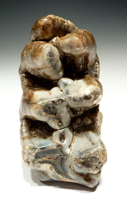 "LMX025 - SUPERB ""SHOVEL-TUSKER"" PREHISTORIC PLATYBELODON GOMPHOTHERE ELEPHANT MOLAR WITH COMPLETE ROOTS AND FULLY EXPOSED CUSPS"