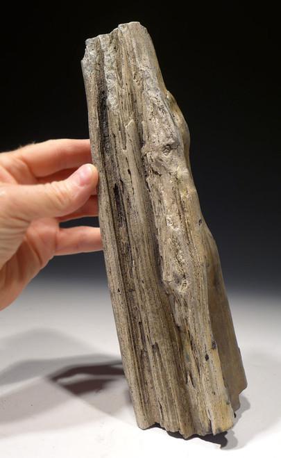 PL158 - RARE LIFELIKE MIOCENE FOSSIL LOG WITH PETRIFIED WOOD NATURAL DETAIL