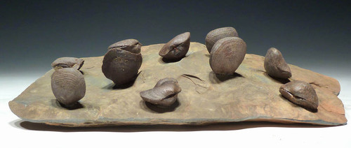 BR005 - EUROPEAN SCHIZOPHORIA DEVONIAN BRACHIOPODS ON SHALE OF FINEST PRESERVATION