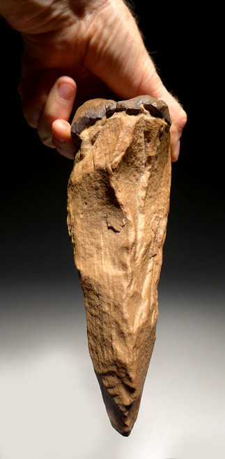LARGE BONE-SMASHING PRESTIGE ACHEULIAN STONE PICK HAND AXE MADE BY HOMO ERECTUS (ERGASTER) WITH UNUSUAL GRIP FEATURE *ACH226