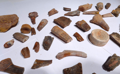 COLLECTION OF NICE 40 FOSSIL DINOSAUR AND REPTILE TEETH AND BONES  *BONELOT16