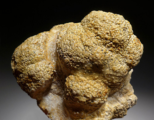 OLIGOCENE FOSSIL STROMATOLITE CYANOBACTERIA BALL COLONIES FROM AN ANCIENT LAKE  *STX517