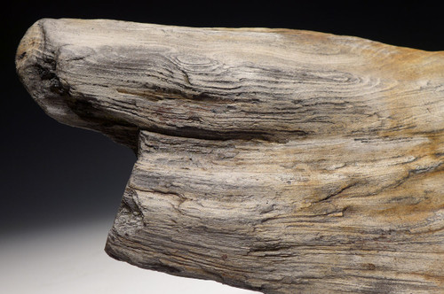 PETRIFIED LOG WITH AMAZING FOSSILIZED WOOD GRAIN AND PERMINERALIZED DETAIL FROM EUROPE  *PL154