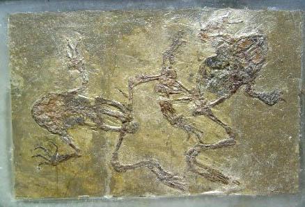 fakefrogfossils1.jpg