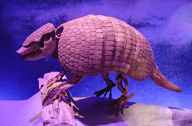GIANT ARMADILLO FOSSILS