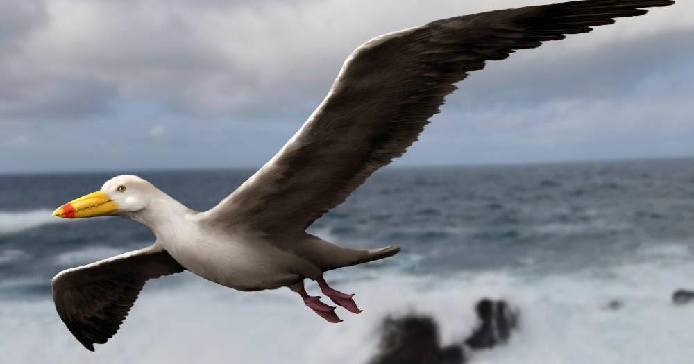 odontopteryx2-nt.jpg