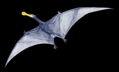 pterosaurmineonew.jpg