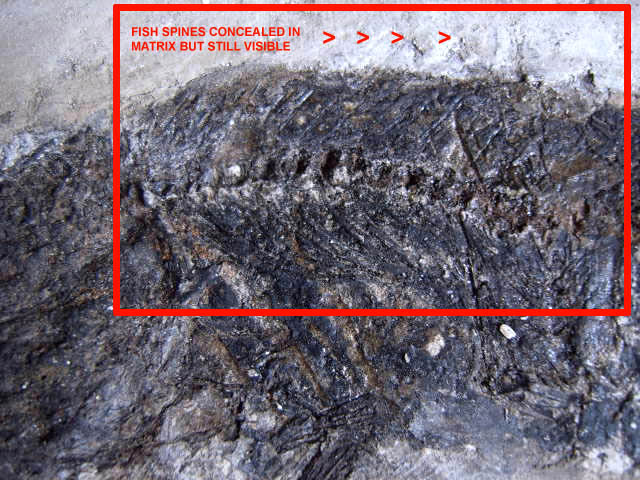 ratfakefossil6.jpg
