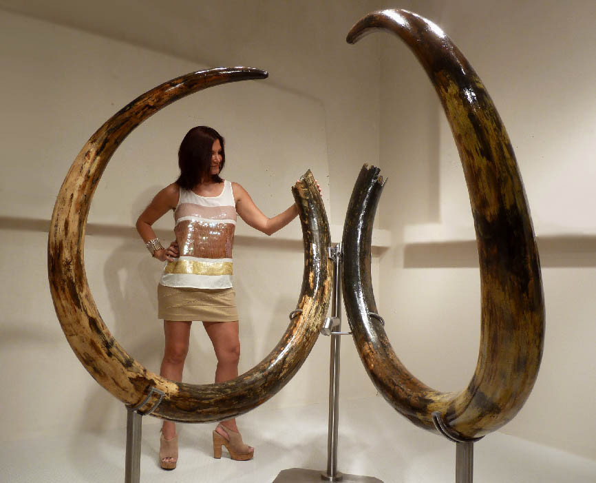 INVESTMENT-GRADE LARGEST 11 5 FOOT PAIR OF WOOLLY MAMMOTH TUSKS FROM  EUROPE'S FINAL ICE AGE *MTX001
