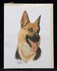 Blank Card with Envelope by Robert May - German Shepherd (RGC08A)