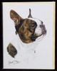 Blank Card with Envelope by Robert May - Boston Terrier (RGC12A)