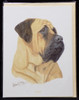 Blank Card with Envelop by Robert May - Mastiff (RGC49)