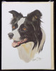 Blank Card with Envelope by Robert May - Border Collie (RGC62)
