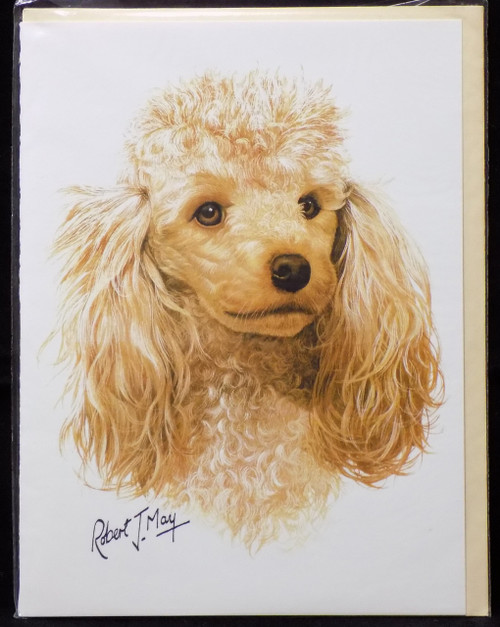 Blank Card with Envelope by Robert May - Apricot Poodle (RGC01C)