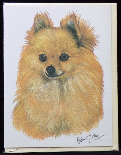 Blank Card with Envelope by Robert May - Pomeranian (RGC03A)