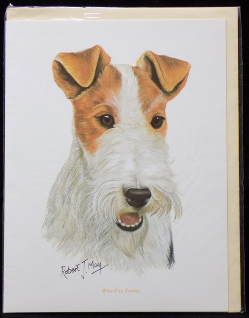 Blank Card with Envelope by Robert May - Wirehaired Fox Terrier (RGC59)