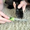 Safari® Diamond Dog Nail File