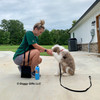 Reggie and his mom training session with Coastal Pet Treat and Training Bag