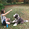 Henrythesheepadoodle and his mom have fun training