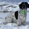 Great For Snow Playtime Too! Oliver Loves His Coastal Pet Pro Waterproof Standard Dog Collar Personalized (4611E) Green
