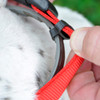How to use a secureaway flea collar cover