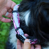 How to use a Secureaway flea collar protector