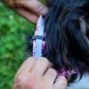 How to use a serresto flea collar protector
