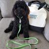 Bo wearing K9 Explorer Brights Reflective Dog Collar and Leash
