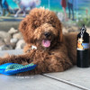 mistercharliedood loves his Rascals Fetch Tug Dog Toy