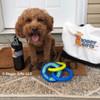 konatheminidood loves his Coastal Pet Rascals Fetch Tri Ring Dog Toy