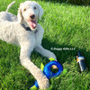 Louie loves playing with his new Rascals Fetch Duck Dog Toy