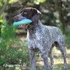 Ruger loves his Rascals Fetch Dog Toy Boomerang 10 Inch (84706NCLDOG)