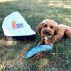 konatheminidood loves his Coastal Pet Rascals Fetch Boomerang Dog Toy